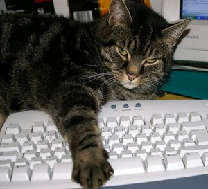 cat-on-keyboard 2