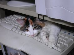 cat on keyboard 7