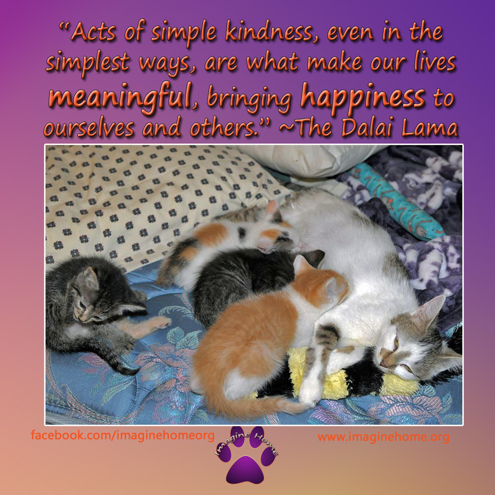 acts of simple kindness_edited-1