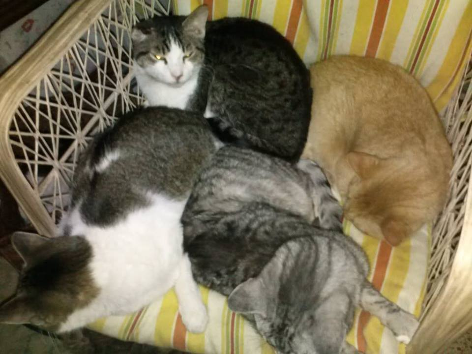 Puffy Paws Cuddle Puddle! Photo Courtesy Puffy Paws website