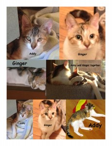 Addy-and-Ginger-collage